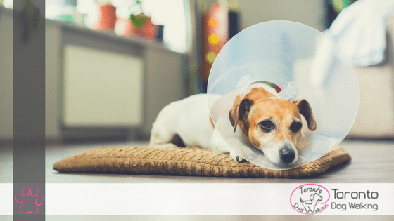 What to Expect When Your Dog Gets Fixed, Neutered!