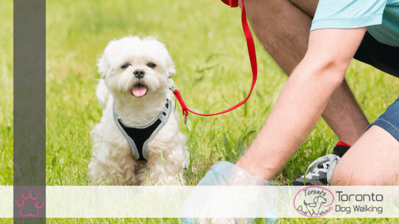 Monitoring Your Dogs Poop & Why it is Important!
