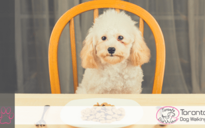 When Should My Pup Start Eating Adult Food?