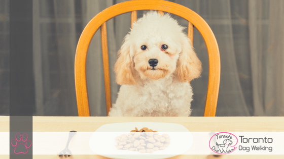 When Should My Puppy Start Eating Adult Food?