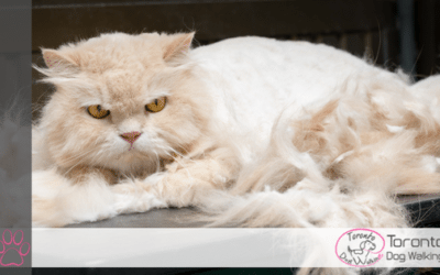 The Problems of Grooming your Own Cat