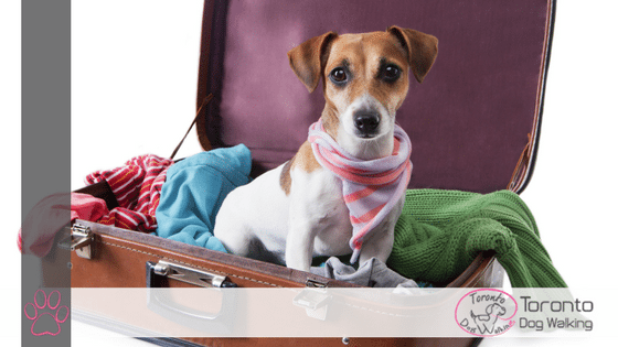 In-Home Dog Boarding or Boarding Kennel:  Which is Better?