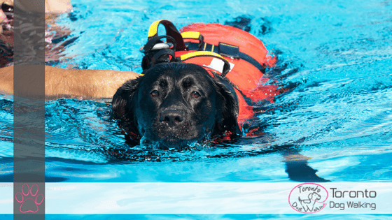 How to Introduce Your Dog To Water & Learn to Swim