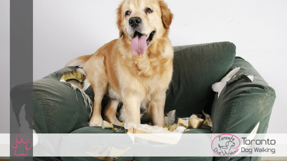 The Problem with Leaving Dog Training Until the Dog is Older