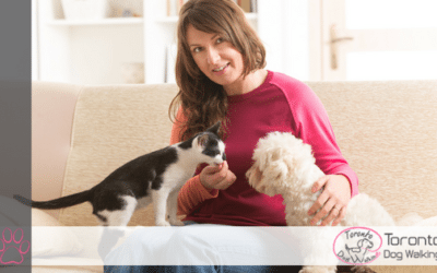 The Problem With Using A Pet Sitter While You Are Out of Town
