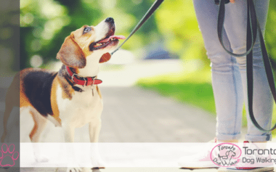 Online Pet Directories or Local Dog Walking Company – Which is Better?