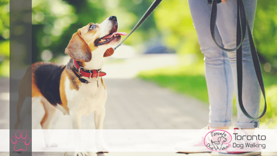 Online Apps like Rover, Wag & Fetch or Local Dog Walking