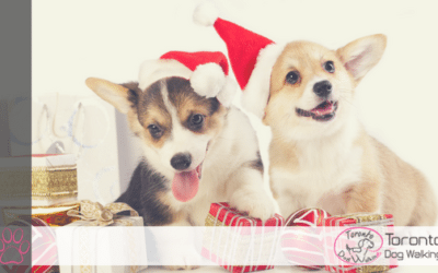 Holiday Gift Ideas for Dogs & Dog Lovers!
