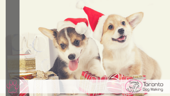 Ultimate Dog Lovers Holiday Gift Guide 2018