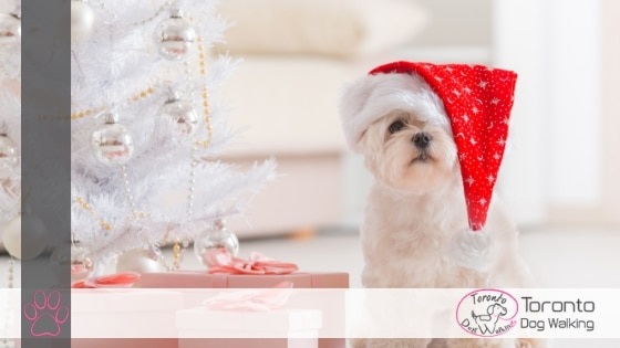 Gift Ideas for Dogs & Dog Lovers! Pick the Pawfect Gift