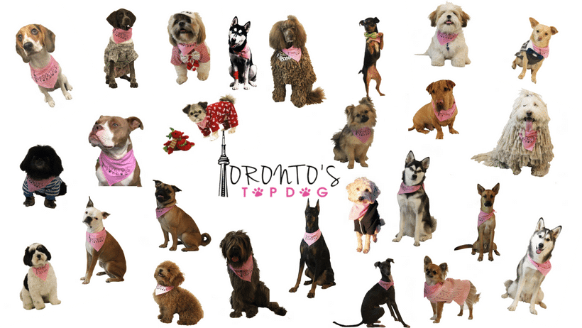 The Doggy Oscars Comes to Toronto ~ Toronto's Top Dog