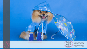 dog raincoat rainboots