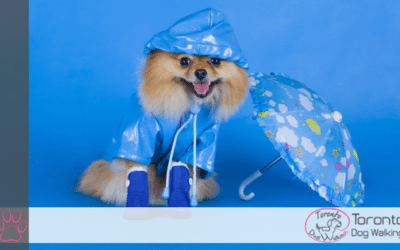 Should Dogs Wear Raincoats and Rainboots When Walking in the Rain?