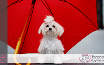 Can Dogs Get Sick Walking in the Rain? What You Need to Know
