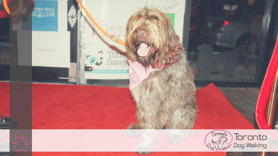 An Interview with Fanny – Toronto's Top Dog