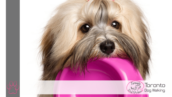 Dog Food: Kibble Vs Raw Vs Homemade Diets – What's Best for Your Dog?