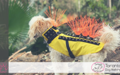 The Coyote Vest & How it Can Save Your Dogs Life!