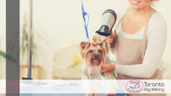 Dog Coat Types & How to Groom Them | Infographic