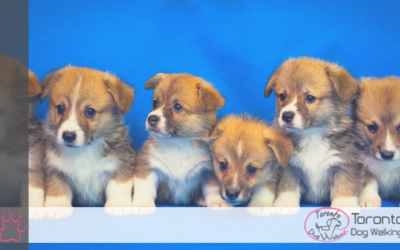 Who Are The Top 10 Most Popular Dog Breeds of 2017