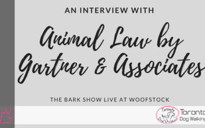 How an Animal Lawyer Can Help You and Your Dog or Pet!