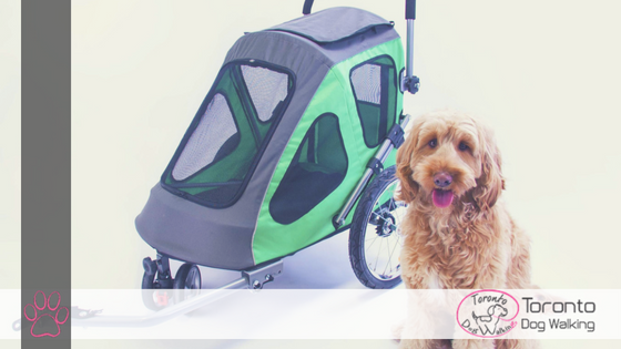 Take Your Doggo with you Everywhere with Everyday Bicycles