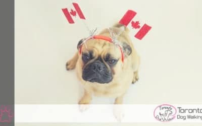 Toronto Dogs are Celebrating Canada Day in Style!