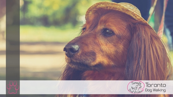 Your Dogs Toronto Event Guide for August – Dog Friendly Toronto