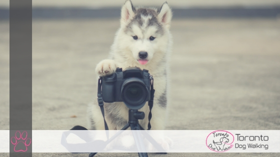 5 Of The Best Toronto Pet Photographers