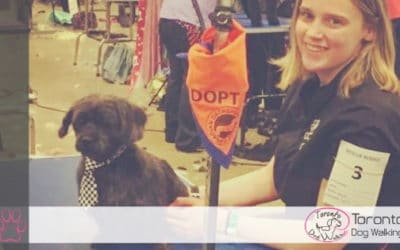 All Things Dog Grooming with Collette Beyer