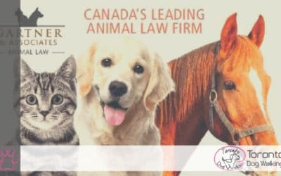 A Lawyer for Your Dog! How Can an Animal Lawyer Help You?